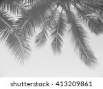 Palm Leaf Shadows On A White...