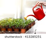 Small photo of Human hand holding watering can and watering young sprouts in flower pots