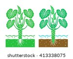 wasabi plant with leaves vector ... | Shutterstock .eps vector #413338075
