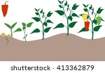pepper growing stage | Shutterstock .eps vector #413362879