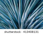agave spikes | Shutterstock . vector #413408131