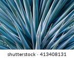 agave spikes | Shutterstock . vector #413408131