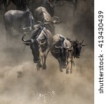Wildebeests Are Crossing Mara...