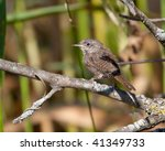 a house wren rests on a tree...   Shutterstock . vector #41349733