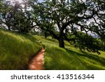 The green grass and large oak trees along Corral Trail, Henry Coe State Park