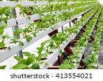 greenhouse greenhouse... | Shutterstock . vector #413554021