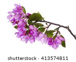 Apple Tree Flowers Isolated On...