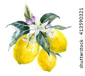 Watercolor Lemon Branch With...