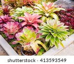 Colorful Of Bromeliad Garden ...