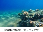 Deep Sea And Coral Reef  Coral...