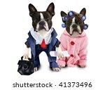 dog couple - stock photo