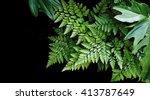 Green Leaves On Black...