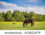 Beautiful Horse Is Eating Gras...