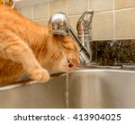 Funny Ginger Cat Drinking Wate...