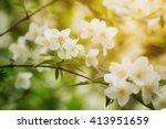 Closeup Jasmine Flowers In...