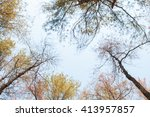 fir tree park in thailand... | Shutterstock . vector #413957857