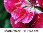 Beautiful Pink Geranium Flower...