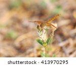 Large Yellow Orange Dragonfly...