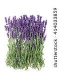 lavender. lavender flowers...   Shutterstock . vector #414033859