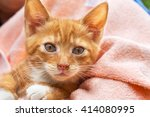 Stock photo cute kitten cat in pink towel 414080995