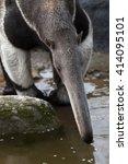 giant anteater  myrmecophaga... | Shutterstock . vector #414095101
