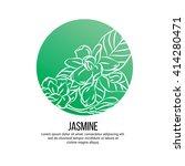 jasmine flowers vector... | Shutterstock .eps vector #414280471