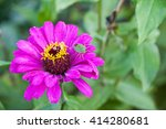 bright flower and bee | Shutterstock . vector #414280681