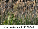 wild vegetation background near ... | Shutterstock . vector #414280861