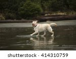 happy yellow lab | Shutterstock . vector #414310759