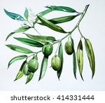 olives on a branch   painting | Shutterstock . vector #414331444