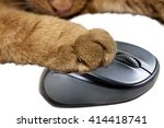 Stock photo yellow cat holding a computer mouse 414418741