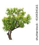 tree of isolate | Shutterstock . vector #414434161