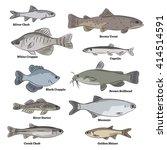 Freshwater fish illustrations. Gold Shiner, Banded Killifish, Creek Chub, River Darter, Black Chub, Mooneye, Pearl Dace, Cisco, Fourhorn Sculpin, Northern Pike, Largemouth Bass.