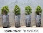 Pine Tree Seedlings On Bare...