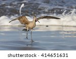 Long Billed Curlew On Beach At...
