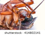 2 1 macro detail of head and... | Shutterstock . vector #414802141