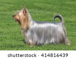 typical  australian silky...   Shutterstock . vector #414816439