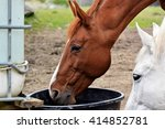Horses with drinking water - stock photo