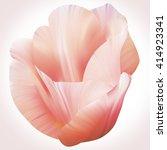 Beautiful Spring Tulip In Soft...