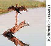 Small photo of African darter sunning its wings over a river with reflection in water