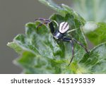 Crab  Spider This Flower Spide...