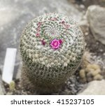 cactus with purple flowers | Shutterstock . vector #415237105