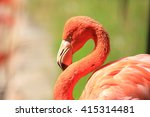 american greater flamingo ... | Shutterstock . vector #415314481