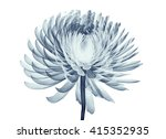 x ray image of a flower ... | Shutterstock . vector #415352935
