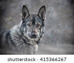 Drawing Mixed Breed Dog Wolf O...