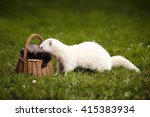 adult and baby ferret in grass | Shutterstock . vector #415383934
