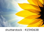 Sunflower Detail Isolated On...