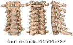 cervical spine structure ... | Shutterstock . vector #415445737