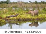 capybara and caiman in the...   Shutterstock . vector #415534009