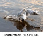 bird and animals in wildlife.... | Shutterstock . vector #415541431